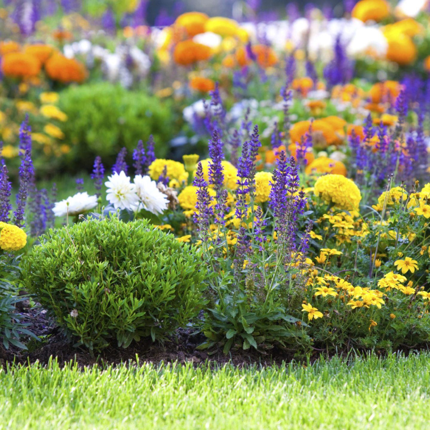 Giardiniere Roma Progettazione Giardini Roma Manutenzione Giardini Roma
